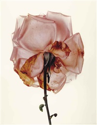 rose: blue moon, london by irving penn