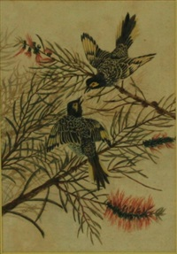 regent honeyeaters by neville william cayley