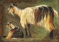two standing and lying longhaired goats. study by johan thomas lundbye