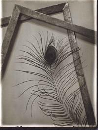 peacock feather, prague by josef sudek
