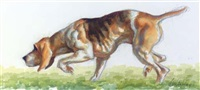 a hound from the middleburg hunt by frank nelson ashley