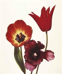 three tulips (red shine, black parrot, gudishnik), new york by irving penn