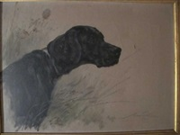 tête de retriever by maud earl