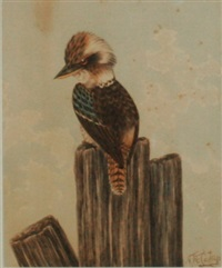 kookaburra by neville william cayley