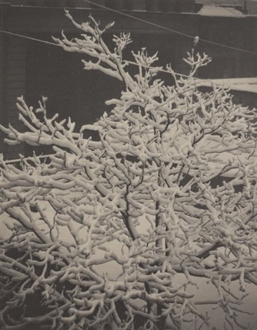 from the back window 291 snow covered tree back yard by alfred stieglitz