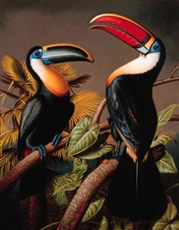 an osculant toucan and a red-billed toucan by nicholas pace