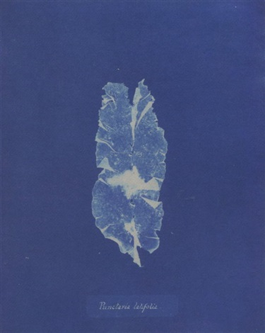 british algae by anna atkins
