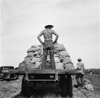 potato truck in the field near shafter, california by dorothea lange