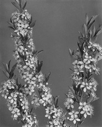 wild flowers of new england, photographed from nature, part iii by edwin hale lincoln