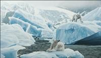 polar bears by rod frederick