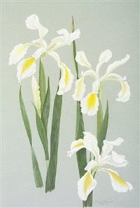 white iris, ochroleuca by grania langrishe