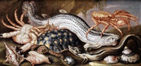 a conger eel, a spider crab, an edible crab and a turtle in a rocky landscape by italian school-northern (17)