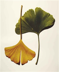 gingko leaves, new york by irving penn