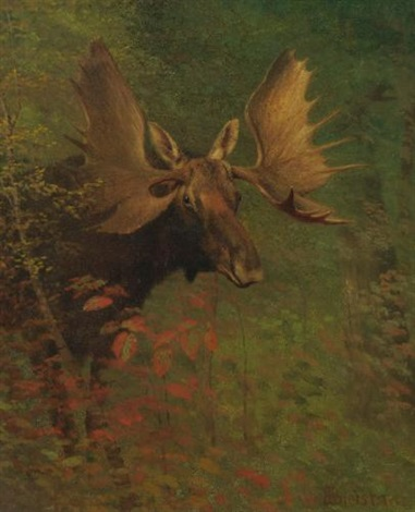 study of a moose by albert bierstadt