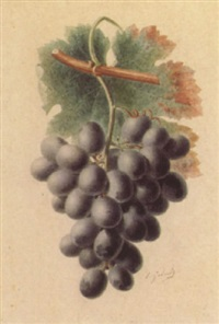 la grappe de raisins duc d'anjou by e. godard