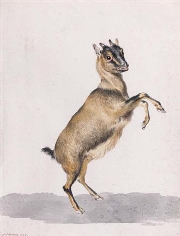 une antilope de la côte de guinée by aert schouman