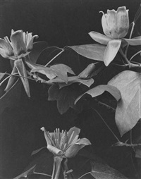 wild flowers of new england, photographed from nature, part iv by edwin hale lincoln