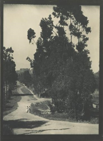 near hollywood california eucalyptus roadway by alvin langdon coburn