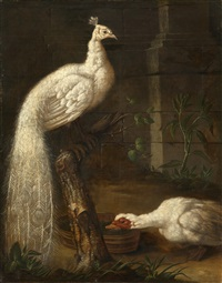 a goose and a white peacock by johann friedrich grooth