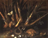 sugar cane and a species of passiflora with reptiles and seashells by albert van der eeckhout