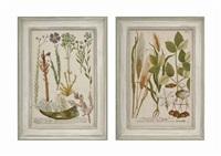 botanicals (14 works) by johann wilhelm weinmann