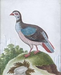 the turaco and the red barbary partridge (pair) by samuel dixon