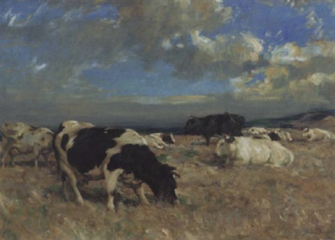 cattle in the highlands by andrew douglas