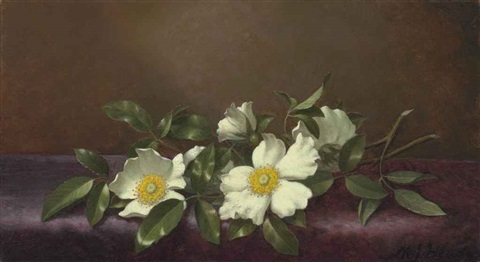 cherokee roses on a purple cloth by martin johnson heade