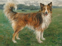 portrait eines collies by max spilhaczek