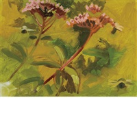 joe pye weed by lois dodd