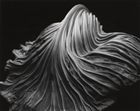 cabbage leaf by edward and cole weston