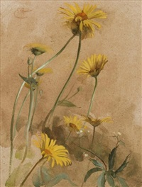 yellow daisies by edwin john alexander