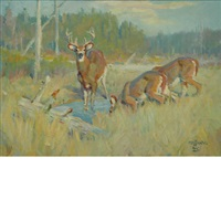 deer in a field by frank b. hoffman