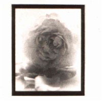 untitled (rose) by jose picayo