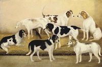 favorite hounds with a favorite terrier by h. young