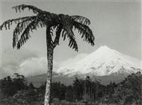taranaki by peter peryer