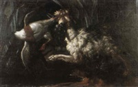 chien barbet attaquant un colvert by gabriel rouette