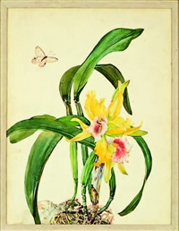 cattelya orchid (study) (+ another; pair) by andrey avinoff