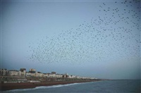 untitled (starlings over brighton) (from murmuration series) by rinko kawauchi