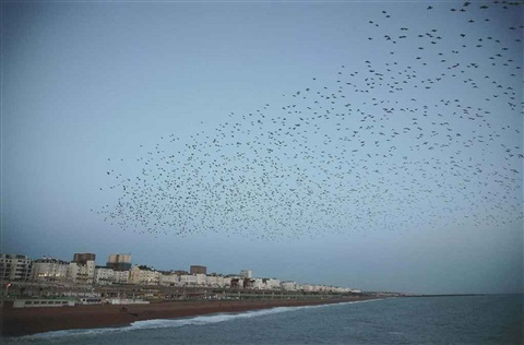 untitled starlings over brighton from murmuration series by rinko kawauchi