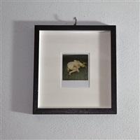 polaroid 09 by nobuyoshi araki