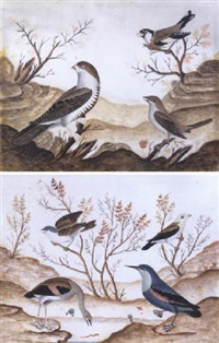 birds in a landscape by carlo (il paiola) battaglia