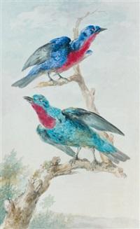 un couple de quereivas, ou cotingas de guyane, sur une branche dans un paysage valloné by aert schouman