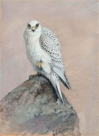 greenland gyr falcon by george edward lodge