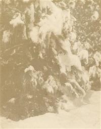 snow tree by william b. post