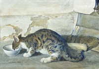 a tabby cat drinking milk by joseph poole addey