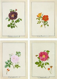 studies of roses by th. götz