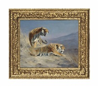 tigers by lilian cheviot