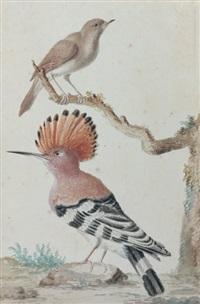 une hupe et un rossignol perchés sur un arbre dans un paysage - upupu epops et luscinia magarhynchos by aert schouman