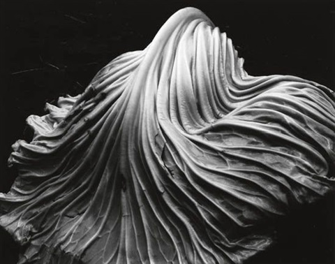 cabbage leaf by edward weston